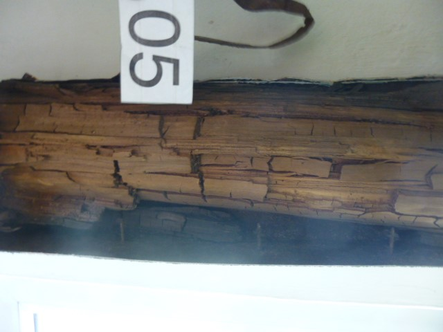 echter Hausschwamm (Serpula lacrymans)